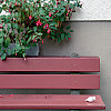 Gerda, Switzerland - Bench + Berry Bush
