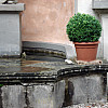 Gerda, Switzerland - Fountain + Plant