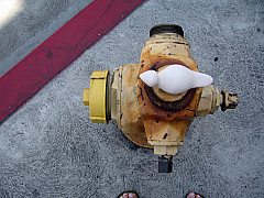 Los Angeles - Hydrant