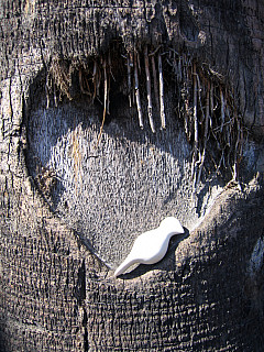 Los Angeles - Tree Heart