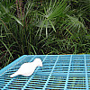 Miami - Blue Grates