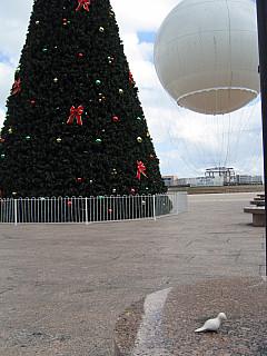 Miami - Christmas Tree