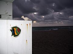 Miami - Night Beach Sky