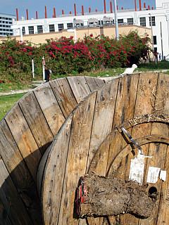 Miami - Wire Wheel