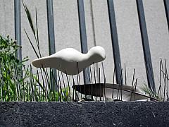 San Francisco - Pigeon Pins