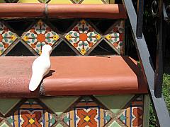 San Francisco - Tile Steps