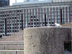 Boston - Business Building