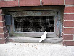 Boston - Cellar Hole