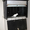 Boston - Deposit Box