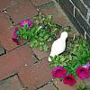 Boston - Fushia Flowers
