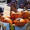 Boston - Pumpkins
