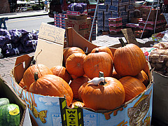 Boston - Pumpkins