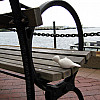 Boston - Sea Bench