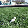 Chicago - Park Grass