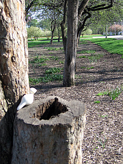 Chicago - Park Stump