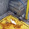 Chicago - Yellow Rust