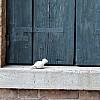 Italy, Venice - Blue Shutter
