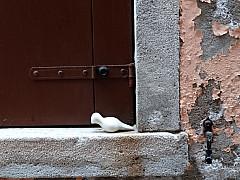 Italy, Venice - Peach