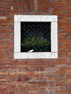 Italy, Venice - Windowsill