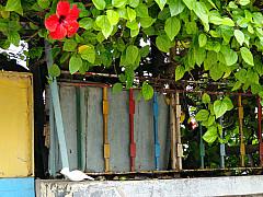 Morocco - Flower Gate 2