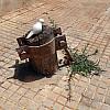 Morocco - Sidewalk Stump 2