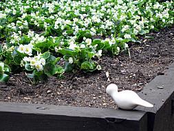 New York - Flowers