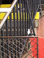New York - Mondrian