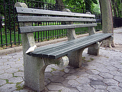 New York - Park Bench