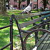 New York - Pigeon Bench