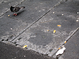 New York - Pigeon Street