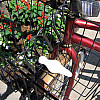 New York - Red Bike