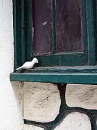 New York - Window Sill