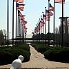 Omaha - Flag Row