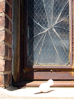 Rochester - Broken Window
