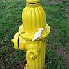 Rochester - Hydrant