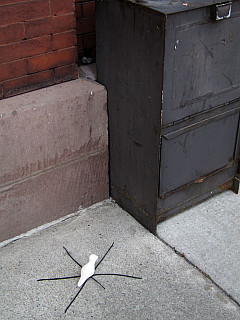 Rochester - Street Web