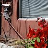 Savannah, Georgia - Curb Flowers