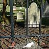 Savannah, Georgia - Graveyard Nest
