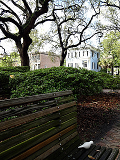 Savannah, Georgia - Park Bench