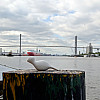 Savannah, Georgia - Post and Bridge