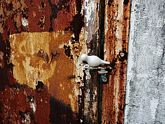 Savannah, Georgia - Rust Hinge