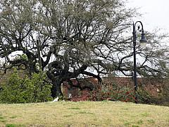 Savannah, Georgia - Tree and Post