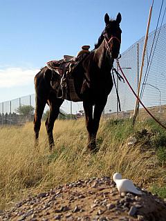 Mexico - Horse