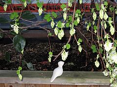 Seattle - Danger Planter