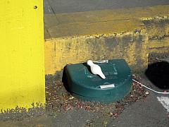 Seattle - Yellow/Green Step