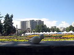 DNC - Art Museum