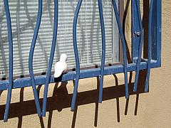 DNC - Blue Window Bars
