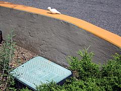 DNC - Orange Road Wall