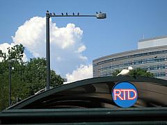 DNC - Pigeons RTD