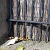 Germany - Iron Bars